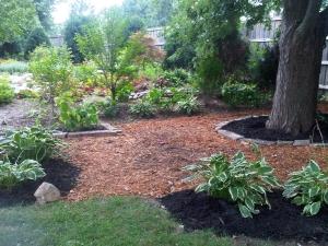Backyard By Shed